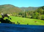 Ferienwohnung und Gästezimmer auf dem Hänslehof im Elztal,Schwarzwald